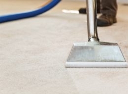 How Do I Remove Bird Pee Urine From My Carpet?