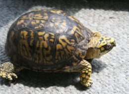 How Do I Remove Tortoise Turtle Reptile Poop Faeces From My Carpet?